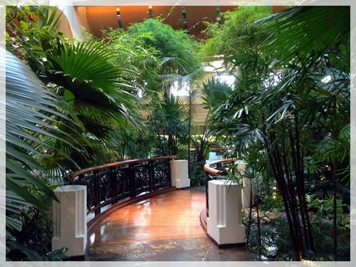 rainforest in dubai